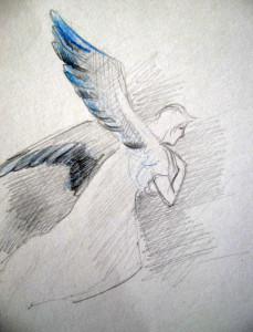 Kékszárnyú angyal