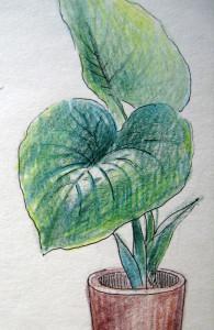 Megjelenítés, virág, részlet, színes ceruza