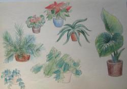 Megjelenítés, virágok, színes ceruza