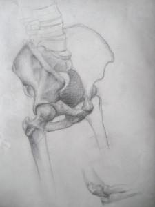 csontváz-tanulmány, ceruzarajz
